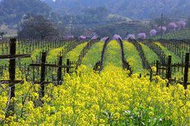 Blue Rock Vineyard